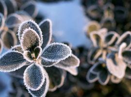 Priprava vrta na zimsko spanje